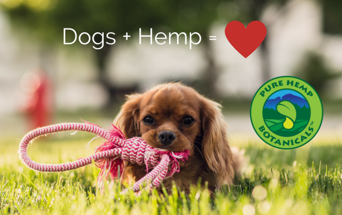 pure hemp botanicals, hemp, cbd, organic, vegan, pet tincture, arthritis, elderly pet care
