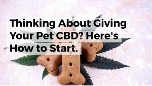cbd, cbd for pets, pure hemp botanicals, hemp, hemp oil, hemp cbd tincture