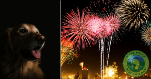 How can CBD help your pets during the 4th of July?