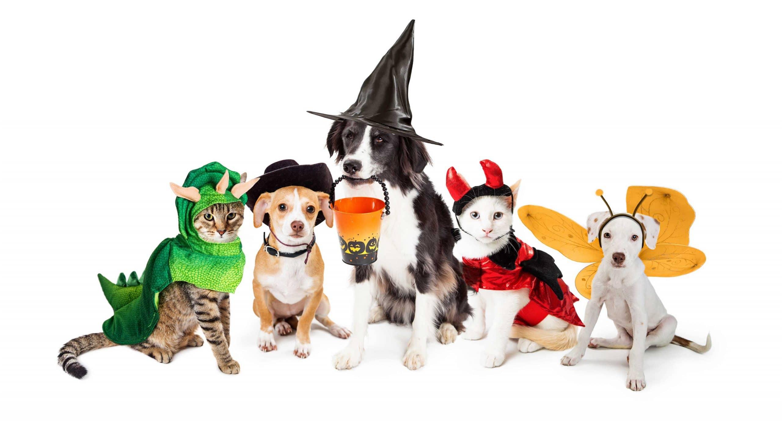 PHB Pet Hempoween Costume Contest!