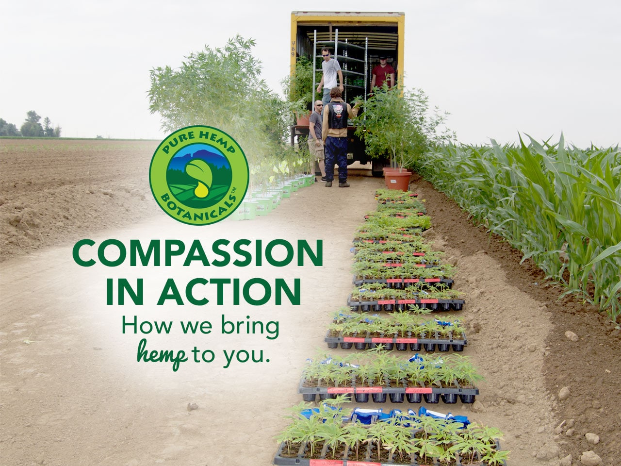 Compassion in Action: How We Bring Hemp to You