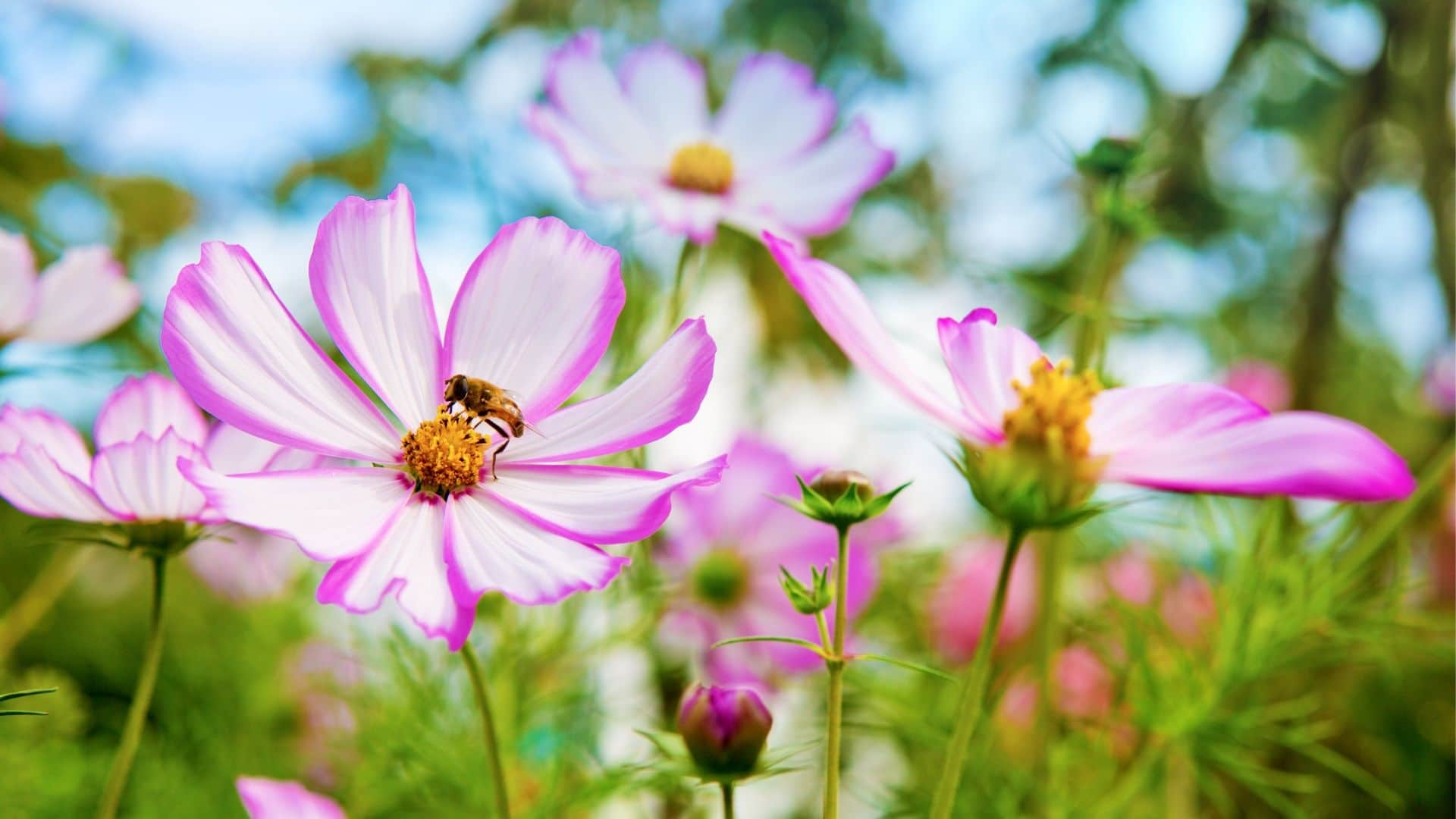 Bee Safe Weed Control