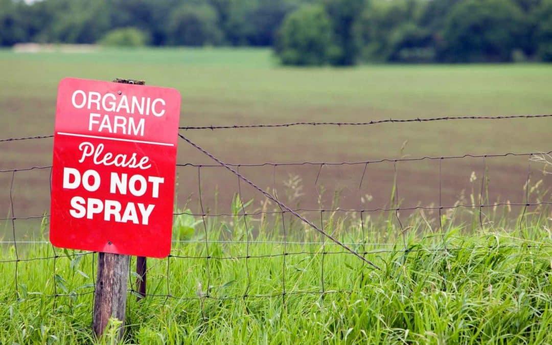Homemade Organic Pesticides