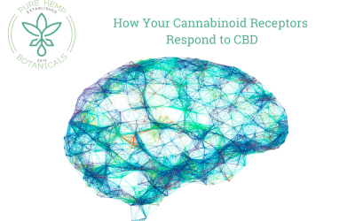 How Cannabinoid Receptors Respond to CBD