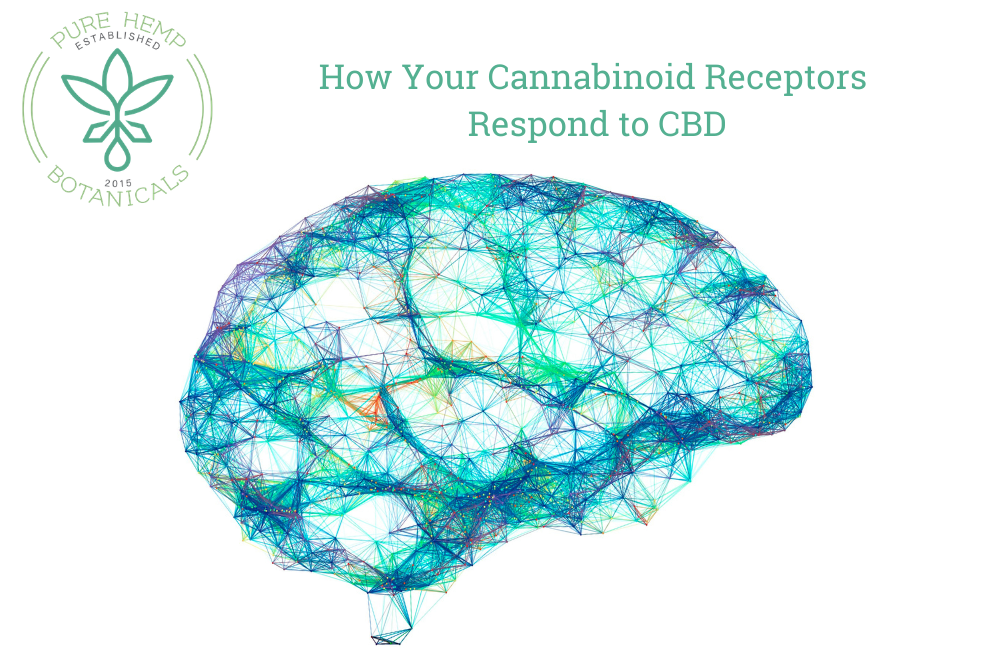 How Cannabinoid Receptors Respond to CBD