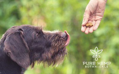 No-Bake Pumpkin Peanut Butter CBD Dog Treats