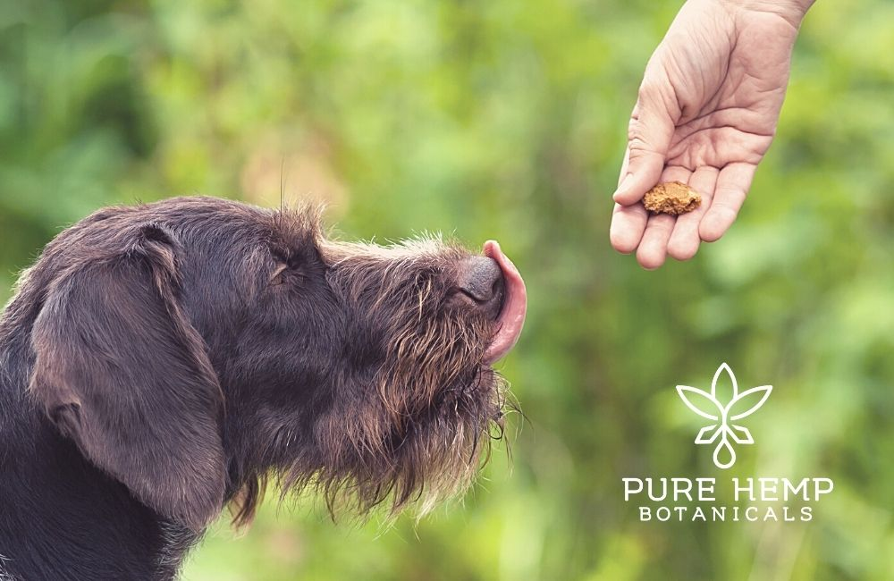 No-Bake Pumpkin Peanut Butter CBD Dog Treats