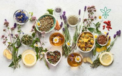The Best Herbal Teas and Their Benefits