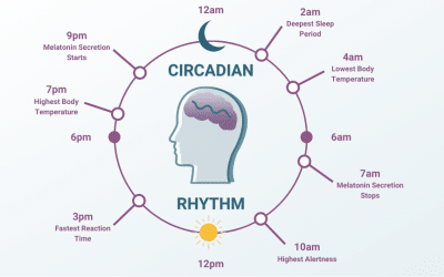 Circadian Rhythm: What Is It, and How Does It Function?
