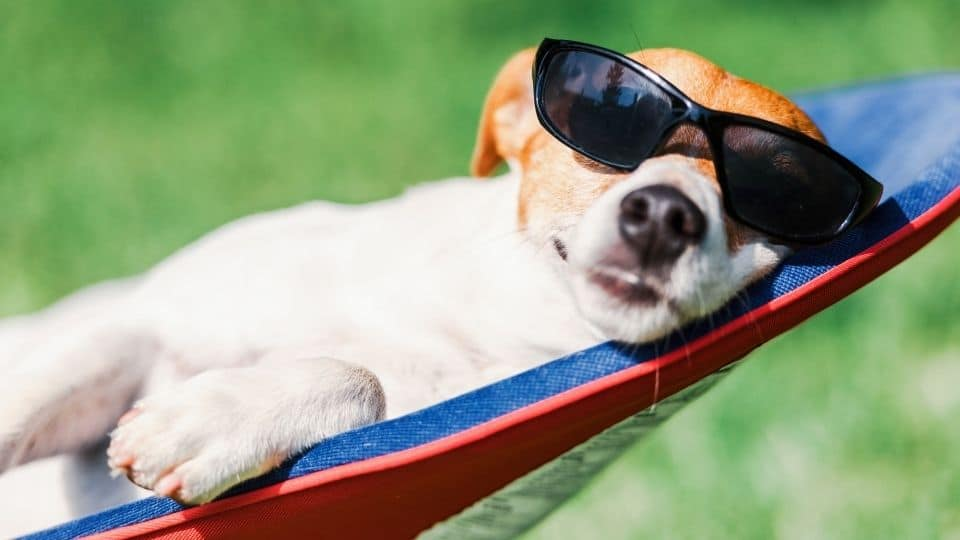 10 Tips To Beat The Heat This Summer