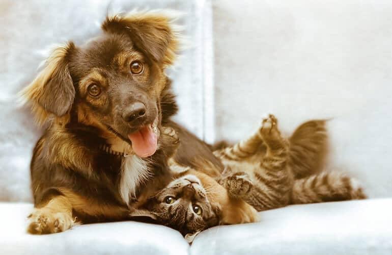 Pure Pet Harmony