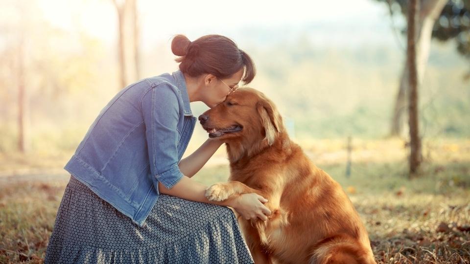 CBD for your Senior Pet